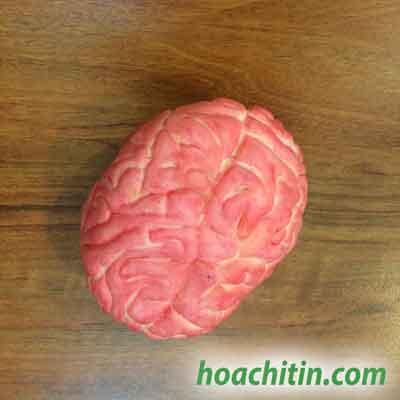 Bộ não máu mẫu số 2